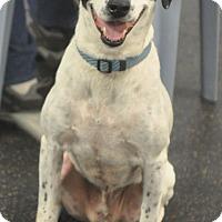 Adopt A Pet :: Travis - Tampa, FL