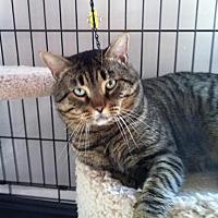 Adopt A Pet :: Frank - Atco, NJ