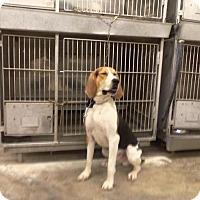 Adopt A Pet :: BUSTER - Upper Sandusky, OH