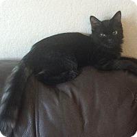 Adopt A Pet :: *ANIME - Sacramento, CA