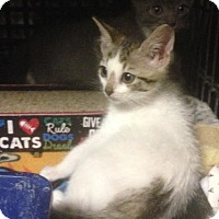 Adopt A Pet :: Bean - East Brunswick, NJ