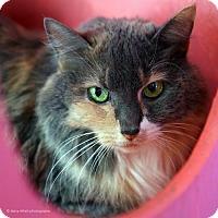 Adopt A Pet :: Genie - Tucson, AZ