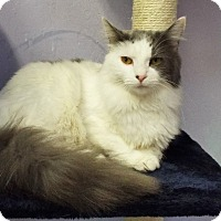 Adopt A Pet :: Ms Kitty - Grants Pass, OR