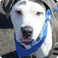 Adopt A Pet :: OAKLEY - Clayton, NJ