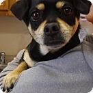 Adopt A Pet :: Files Crossrds. Stray