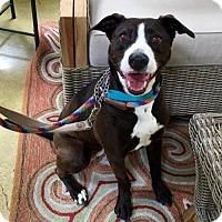 Adopt A Pet :: Neva - San Diego, CA