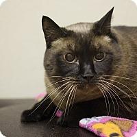 Adopt A Pet :: Juliet - Sterling, KS