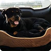 Adopt A Pet :: Tilly - Mason, MI