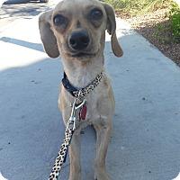 Adopt A Pet :: Merlin - Las Vegas, NV