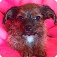 Adopt A Pet :: Trick - St. Louis Park, MN