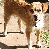 Adopt A Pet :: Donatella - Woonsocket, RI