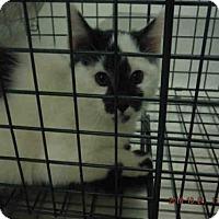 Adopt A Pet :: A571344 - Oroville, CA