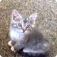 Adopt A Pet :: Nieve - Philadelphia, PA