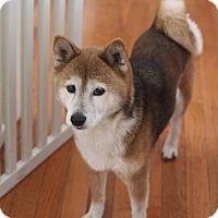 Adopt A Pet :: Chie - Manassas, VA