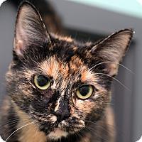 Adopt A Pet :: AUDREY - Royal Oak, MI