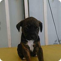 Adopt A Pet :: Kayla - LAKEWOOD, CA