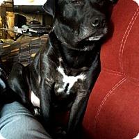 Adopt A Pet :: Dominic - Wyoming, MI