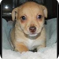 Adopt A Pet :: Topper - Staunton, VA