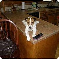 Adopt A Pet :: Oliver in Houston - Houston, TX