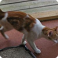 Adopt A Pet :: Mikie - Monroe, GA