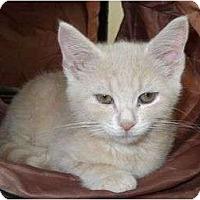 Adopt A Pet :: Binky - Reston, VA