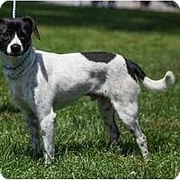 Adopt A Pet :: Lyndon - Poway, CA