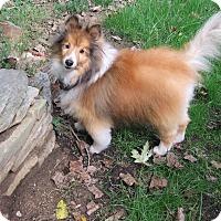 Adopt A Pet :: Finlay - Wilmington, DE