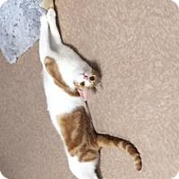 Adopt A Pet :: Tinker - Chesapeake, VA