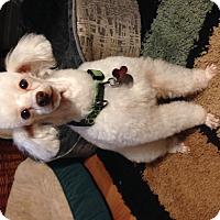 Adopt A Pet :: Arthur - Marietta, GA
