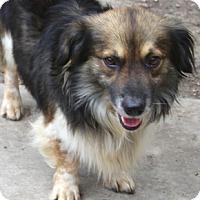 Adopt A Pet :: Teebo - MEET HIM - Norwalk, CT