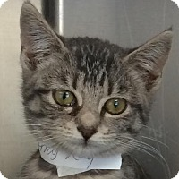 Adopt A Pet :: Pumpkin - East Brunswick, NJ