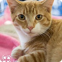 Adopt A Pet :: Jake - Merrifield, VA