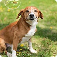 Adopt A Pet :: Clem - Toronto, ON
