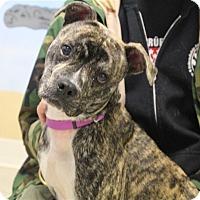 Adopt A Pet :: Sparrow - Elyria, OH