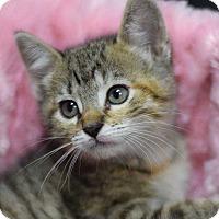 Adopt A Pet :: Catherine - Manhattan, NY