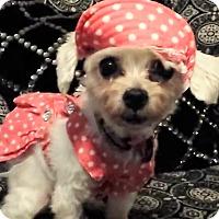 Adopt A Pet :: Coco - Covina, CA