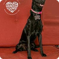Adopt A Pet :: Onyx - Inglewood, CA