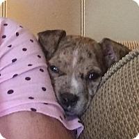 Adopt A Pet :: Cisco - Trenton, NJ