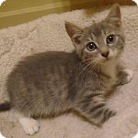 Adopt A Pet :: Becka - Hamilton, ON