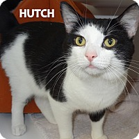 Adopt A Pet :: Hutch - Lapeer, MI