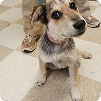 Adopt A Pet :: Toots - Kingman, KS