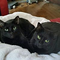 Adopt A Pet :: Sassafras - Richmond, VA