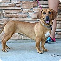 Adopt A Pet :: Cabernet - Salt Lake City, UT