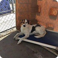 Adopt A Pet :: Selena - Big Spring, TX