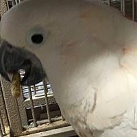 Adopt A Pet :: Peaches - Punta Gorda, FL