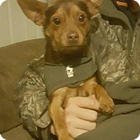 Adopt A Pet :: Ty - Glastonbury, CT
