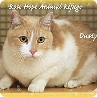Adopt A Pet :: Dusty - Waterbury, CT