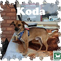Adopt A Pet :: Koda - Fallston, MD