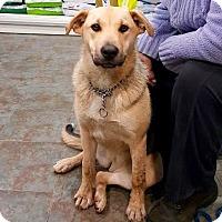 Adopt A Pet :: Josie - Surrey, BC