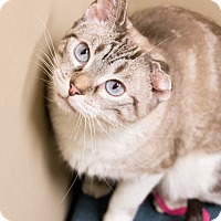 Adopt A Pet :: Precious - Chicago, IL